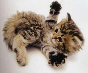 B b chat joueur - Photo de chaton rigolo ...